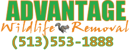 Cincinnati Pest Control | Advantage Wildlife Removal
